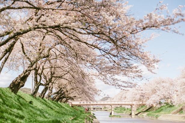 岐阜県の桜名所・お花見(人気順)|桜名所 お花見特集2019 ...