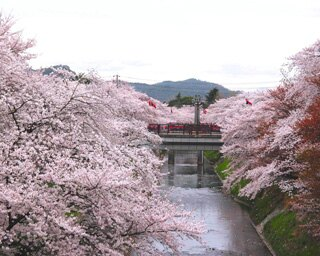 儚い美しさにあっぱれ!日本3大桜や、水面に映る桜を満喫したい!!岐阜の花見スポット3選