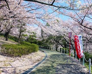 桜の季節がやってきた!愛知の桜名所&併せて行きたい遊びスポット3選!!<2019年版>