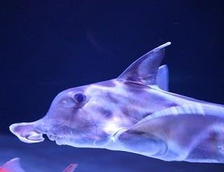 早川いくを氏とサンシャイン水族館の飼育スタッフが選んだ約20種の生物が展示