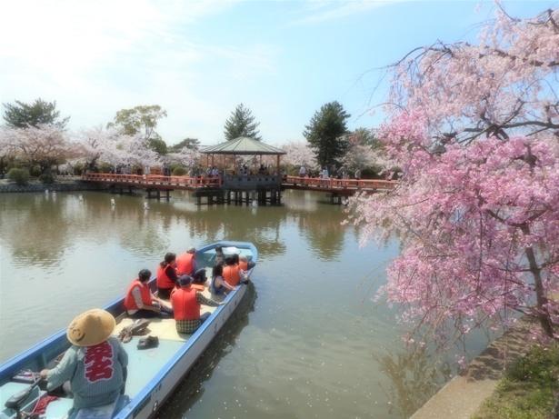 「九華公園の桜」のお花見(桑名市吉之丸)