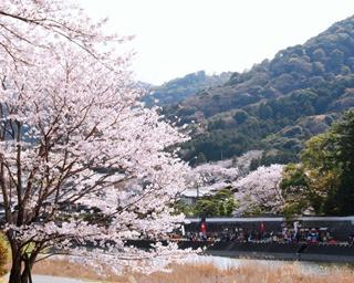 <2019年版>三重で花見へ行くならココ!おすすめ桜スポット3選