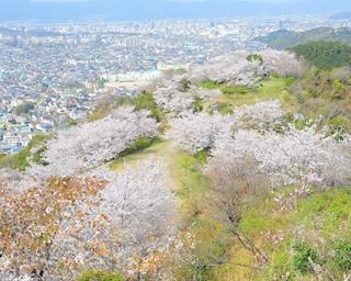 春の訪れを告げる!和歌山市の3大桜名所