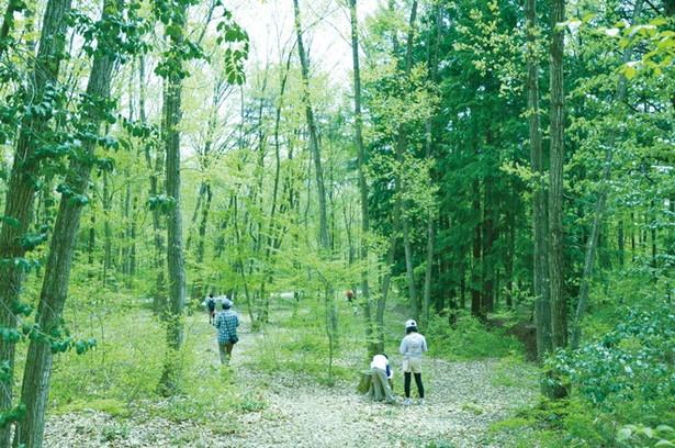 森の新緑やツツジを楽しみながら散策!