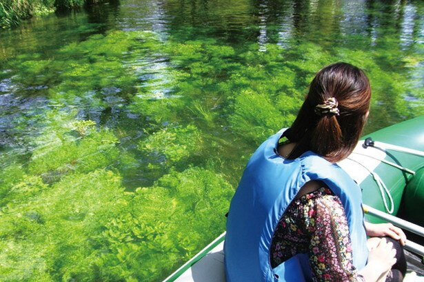 水中に揺れる水草や藻の間には、ニジマスなどの魚類をはじめ昆虫類の姿も