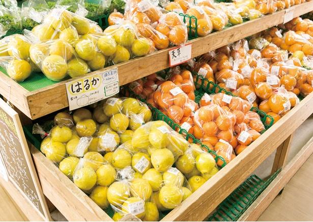 福ふくの里 / 野菜・鮮魚共に、種類や品種だけでなく、生産者ごとに陳列されている