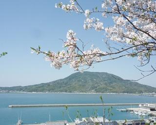 花も団子も眺めも満喫したい!福岡・糸島で春のお花見ドライブ