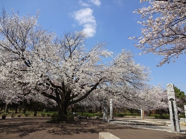 多種多彩な桜が園内を彩る武蔵野公園