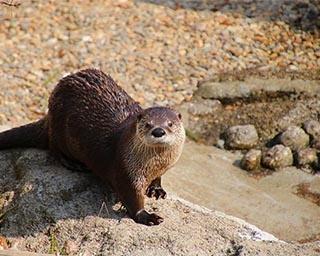 イベント盛りだくさんの春まつり!岩手県盛岡市で「動物公園春まつり」