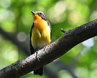 高知県内に生きる様々な野鳥を紹介!高知県香南市野市で「写真展 翼」開催