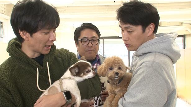 渡部建の愛犬・マロンと、児嶋一哉の愛犬・ネネがテレビ初共演