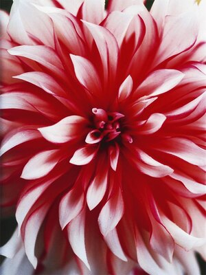 【写真を見る】蜷川実花の写真作品を一堂に展示