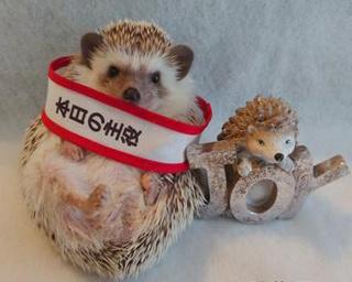 悶絶級にかわいい「小動物展」が名古屋で開催!会場で注目は、この子たちだ!!