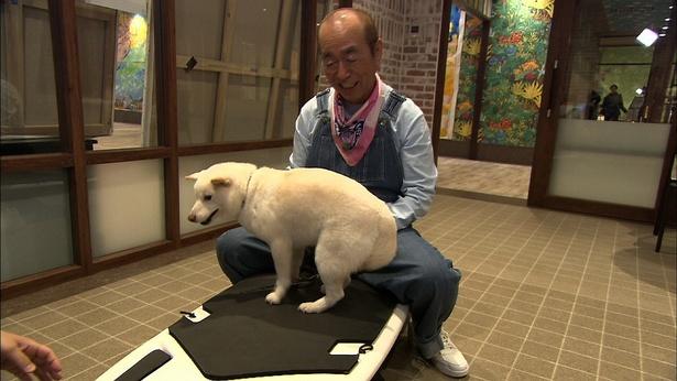 犬用複合施設でフィットネスに挑戦する殿くんと志村けん。緊張で下がってしまった尻尾がかわいい…!