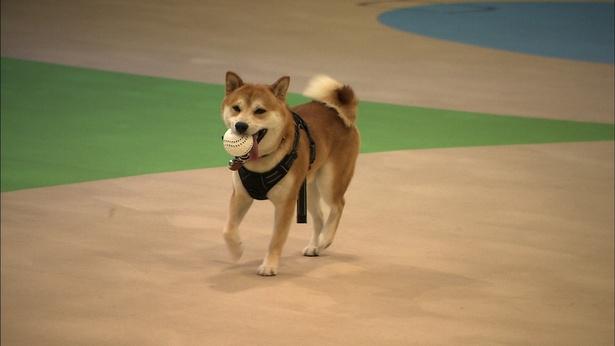 【写真を見る】テレビ初公開となるビートたけしの愛犬・ゴンちゃんがかわいすぎる…!