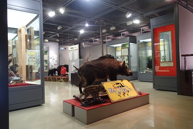 埼玉県立自然の博物館で企画展「要注意!野外の危険なもの」開催中