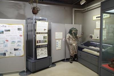 スズメバチやヤマウルシなど様々な生きものを標本と写真で展示