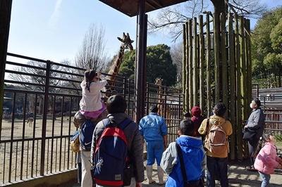 キリンを間近で見ることができる。大迫力のキリンに子どもは大喜び