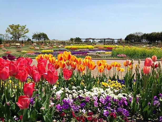 花壇に咲く色とりどり、さまざまな春の花たちを鑑賞できる