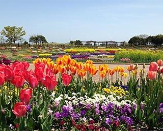 春のピクニックを楽しもう!宮城県仙台市「春のピクニックパーク」