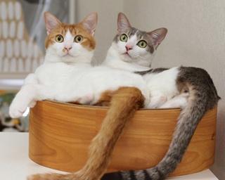 「ねこ休み展」が静岡に帰ってくる!大人気ネコ・ホイちゃんの春の装いや限定グッズに癒されよう