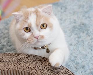 GWのお出かけに!広島で開催される「ねこ休み展」で、にゃんともキュートなネコに癒されよう!!