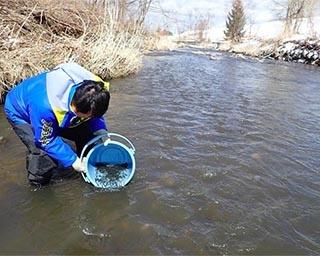 3年後の再会を願ってサケの稚魚を放流!北海道札幌市で「サケ稚魚体験放流」開催