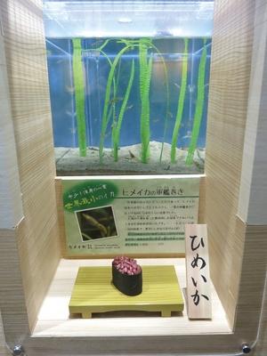 【写真を見る】創作寿司「完全新作!水族館寿司」のコーナーでは、希少なヒメイカの軍艦も見ることができる