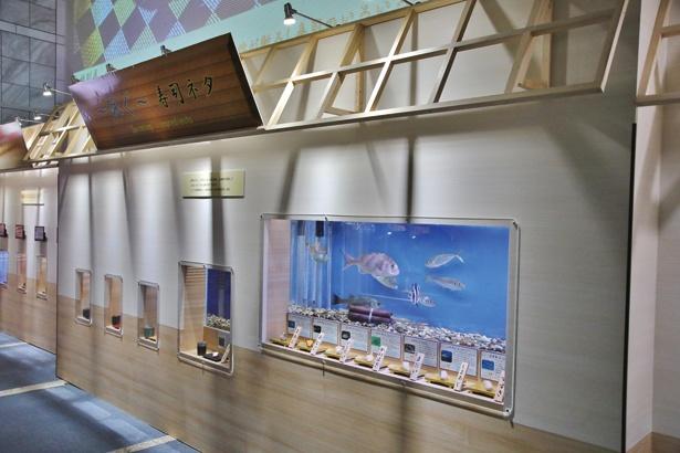 一般的な寿司ネタが泳ぐ「泳ぐ寿司ネタ」のコーナー