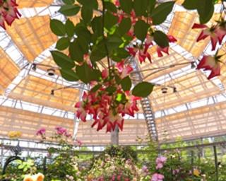 750種・4500株のバラが咲き誇る、はな阿蘇美のローズガーデン