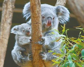 東海地方の動物園に続々!生まれたて&新入りのアニマルに会いに行こう