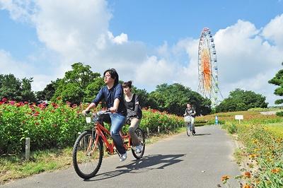 国営ひたち海浜公園ではサイクリングも楽しめる