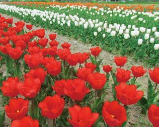 イチゴ狩りに手ぶらでOKのBBQも!地元グルメも花畑も満喫できる「道の駅 アグリパーク竜王」