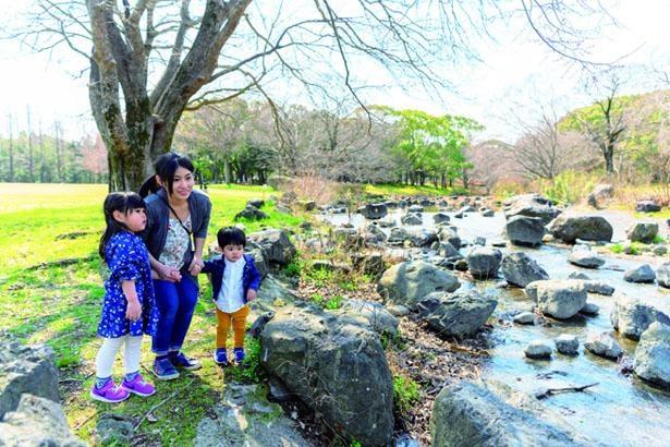 平坦でとても広い「もみじ川芝生広場」や、水深が浅い小川もあり、のびのびと遊べる/万博記念公園