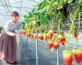 オリジナル品種のイチゴ狩りが楽しめる農園カフェが登場!「草津川跡地公園」