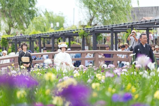 【写真を見る】美しい花嫁と花菖蒲のコラボレーション