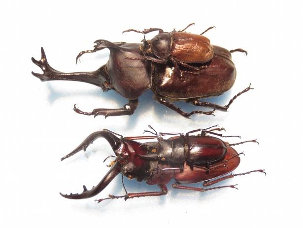 【写真を見る】昆虫の形態や生態を楽しく学べる