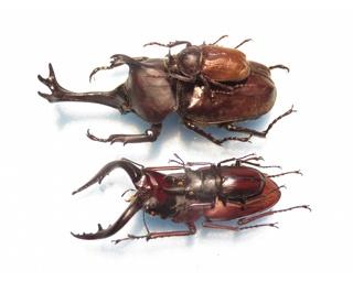 昆虫を解説付きで展示