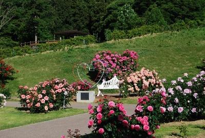 恋人の聖地モニュメントの周りにも美しいバラが咲く