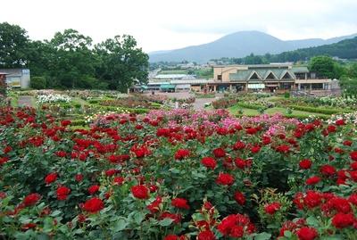 【写真を見る】約3万株のバラが彩る春の楽園
