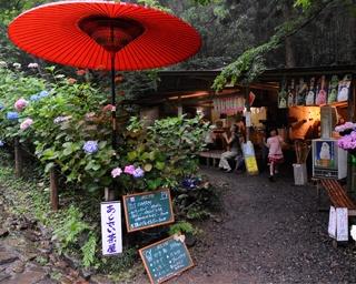 太平山県立自然公園のあじさい坂