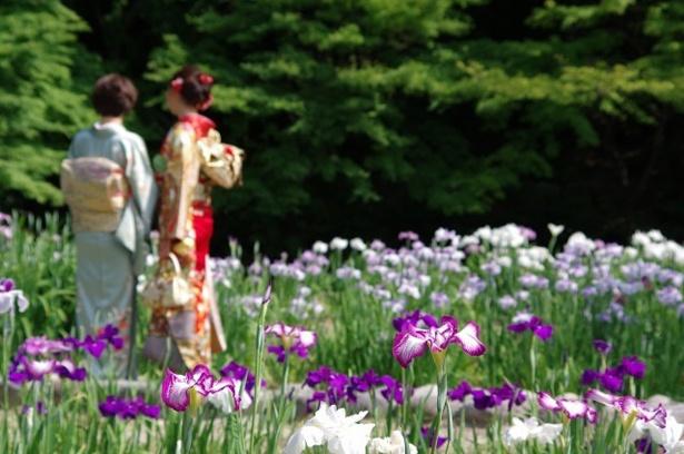 「雨を聴く 徳川園の和傘」(名古屋市東区)では、和傘の貸し出しや展示が催される