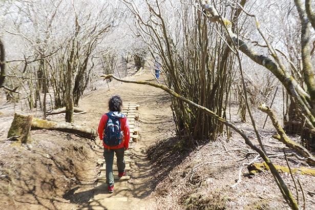 下山はアップダウンの少ない歩きやすい道が続く