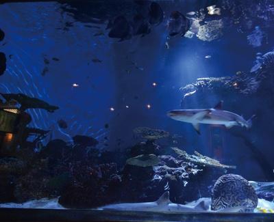 """いおワールド かごしま水族館 / """"夜の水族館""""で実施するトワイライトアクアリウム。夜の生態系が垣間見える"""
