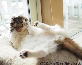 令和最初の夏、藤沢にてスター猫の写真展「ねこ休み展 in 湘南」が開催!