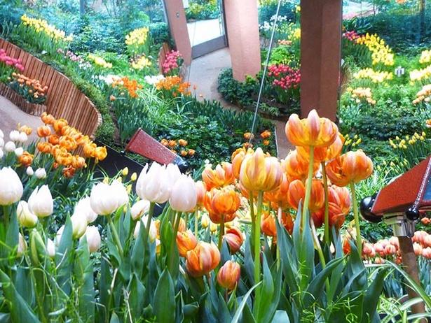 パレットガーデンに咲く「オレンジプリンセス」
