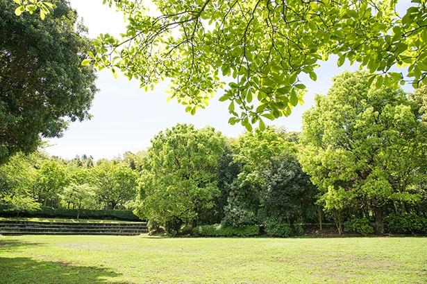 緑豊かな荒井城址公園