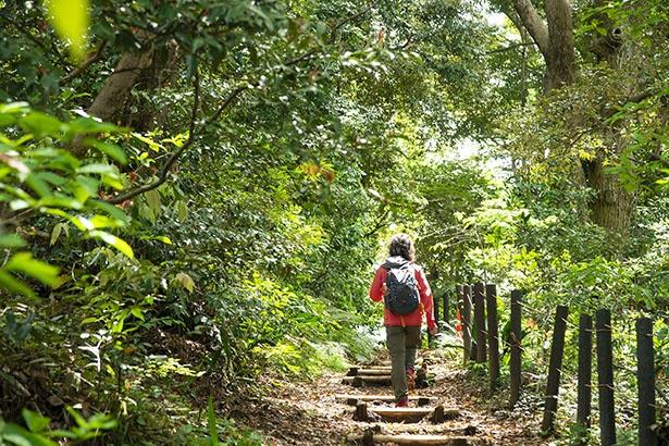 森林浴遊歩道は緑豊か