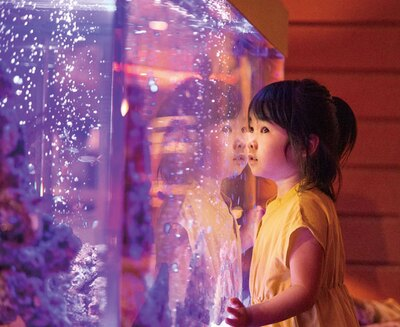 ザ・ルイガンズ. スパ&リゾート ザ ラウンジ オン ザ ウォーター / レストラン内にある熱帯魚の水槽は、食事に飽きた子供の癒しスポットにも