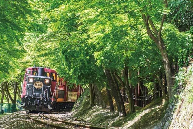 「緑のトンネル」や「レンガのトンネル」で自然の涼風を体感しよう/嵯峨野